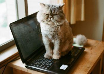 Quem é o seu gato na quarentena?