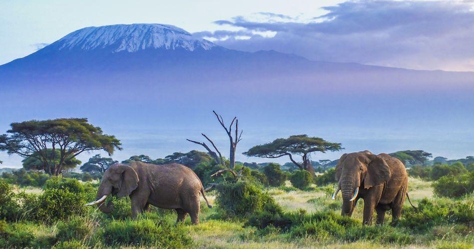 Connaissez-vous les mille visages de l'Afrique ?