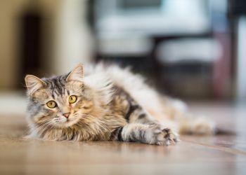 Seu gato é sociável? Faça o teste e descubra!