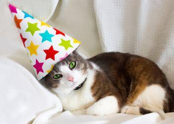 Quem é o seu gato na festa de família?