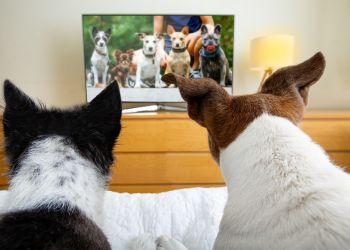 Quem seria o seu cachorro em um reality show na TV?