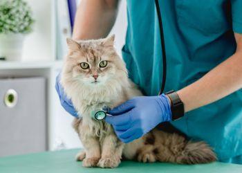 Você é exigente na hora de escolher um veterinário para gato?