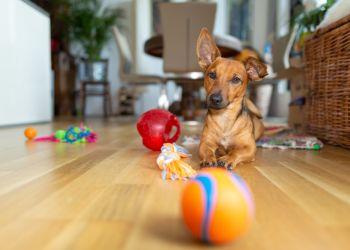 Brincadeiras para cachorro: descubra qual é a favorita do seu pet!