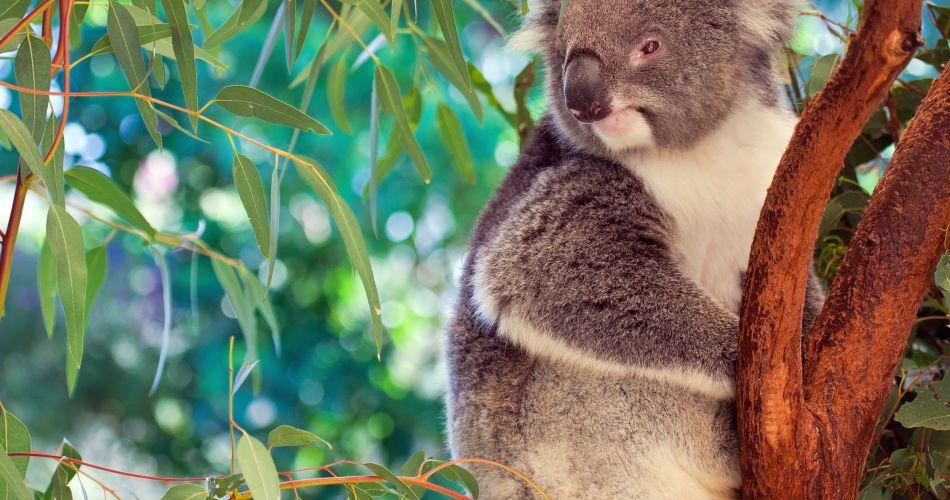 Quels sont ces (drôles) d'animaux originaires ou typiques de l'Austral