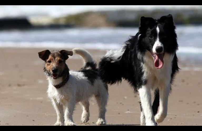 Border Collie e Jack Russell Terrier são aventureiros