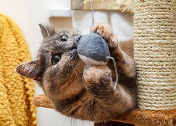 Brinquedos para gatos: faça o quiz e descubra qual o tipo preferido do