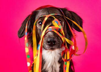 Quem é seu cachorro na festa da família? Faça o quiz e descubra!