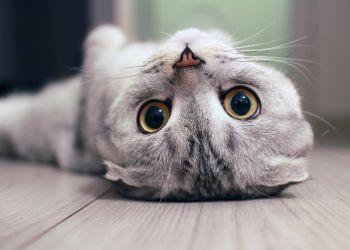 Seu gato é mais sociável, carente ou independente?