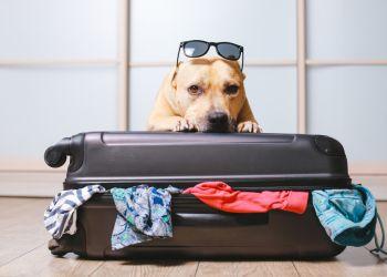 Seu cãozinho está pronto para viajar com a família?