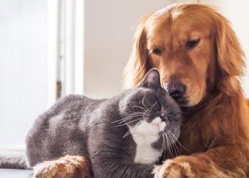 Descubra se você é um cachorro ou um gato!