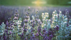 Hergestellt in der Provence