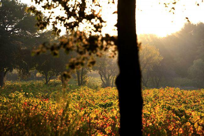 Wenn die Provence ihr Herbstkostüm anlegt