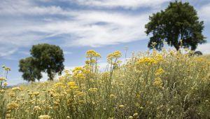 Immortelle-Kultivierungsprogramm: Zehnjähriges Jubiläum!