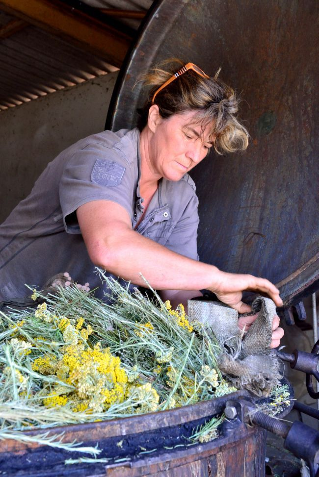 Noëlle Irolla, At the Heart of the Distillation of Essential Oil of Immortelle