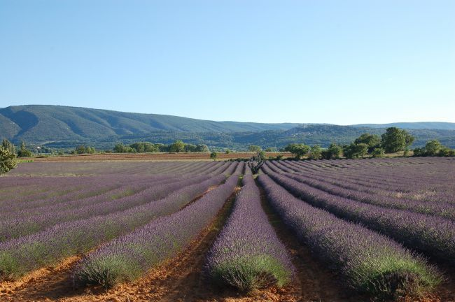 On the Albion Plateau in the Luberon