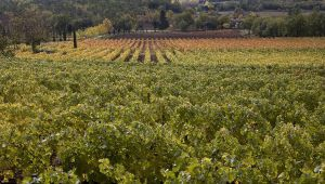 Provencal Landscapes in Fall