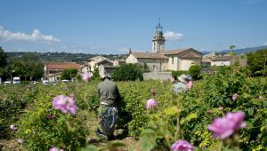 Grasse & the Art of Perfumery on Display at L'OCCITANE Museum