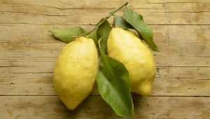 The citron, The Perfectly Flawed Fruit