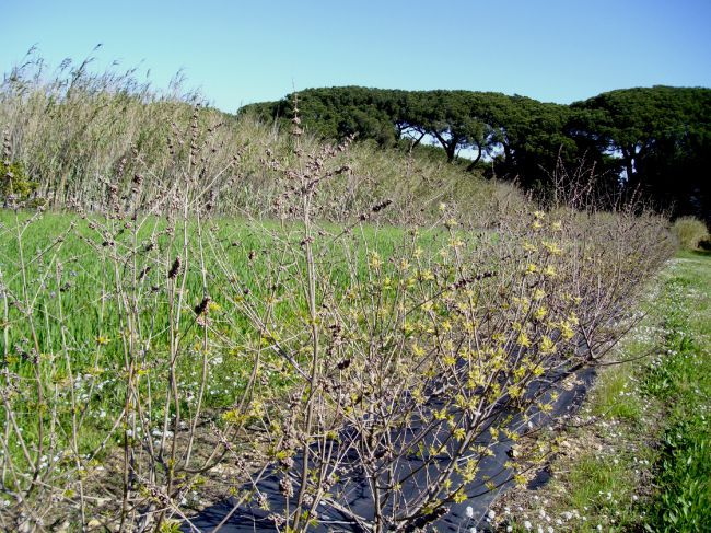 The National Mediterranean Botanical Conservatory of Porquerolles
