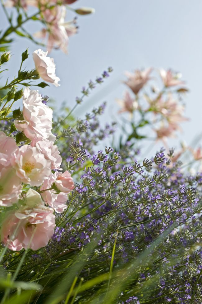 Save Lavender