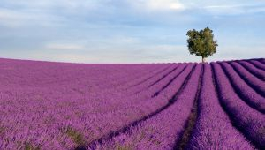 Three Historical Facts You Might Not Know About Provence