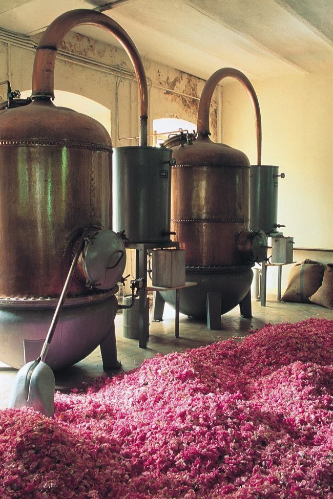 Grasse, the perfume capital