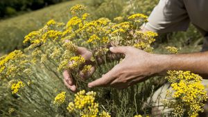 Immortelle: Inside the L'Occitane Research Laboratory
