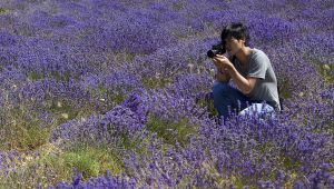 Mr. Oh Immortalizes Lavender for L'Occitane