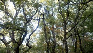 The Sainte-Baume Forest : a Mystical & Shady Corner of Provence
