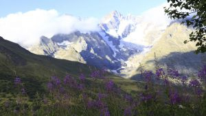 The Lautaret Garden : an Invitation to the Alps
