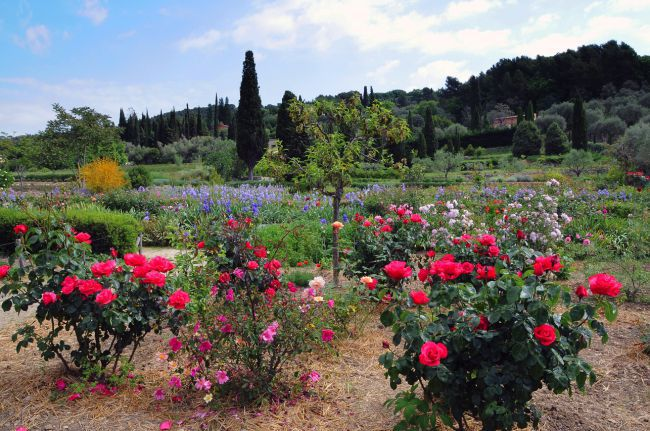 Gardens of the International Perfume Museum in Grasse