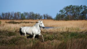 A Walk Through the Heart of the Camargue!