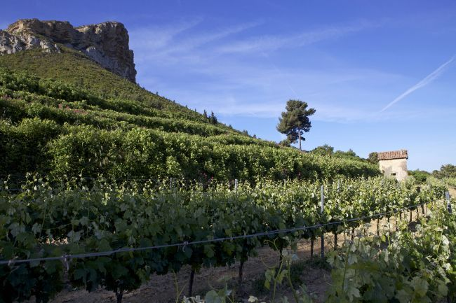 The Clos Sainte-Magdeleine Winery A Family Affair in Cassis