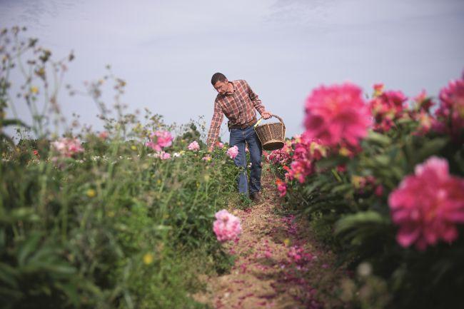 Jean-Luc Rivière, The Peony Farmer