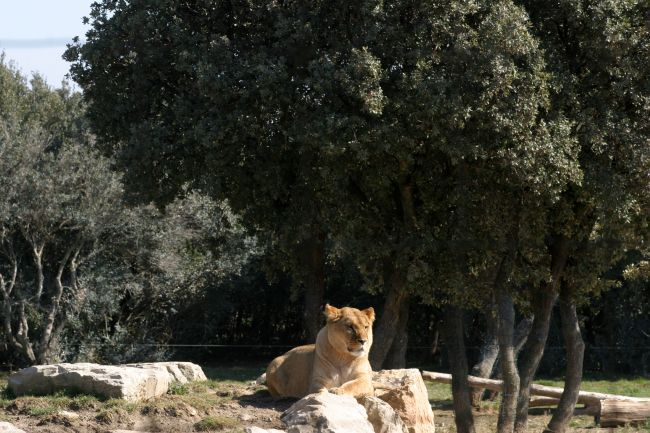 The La Barben Zoo : a Wild Getaway in the Heart of Provence