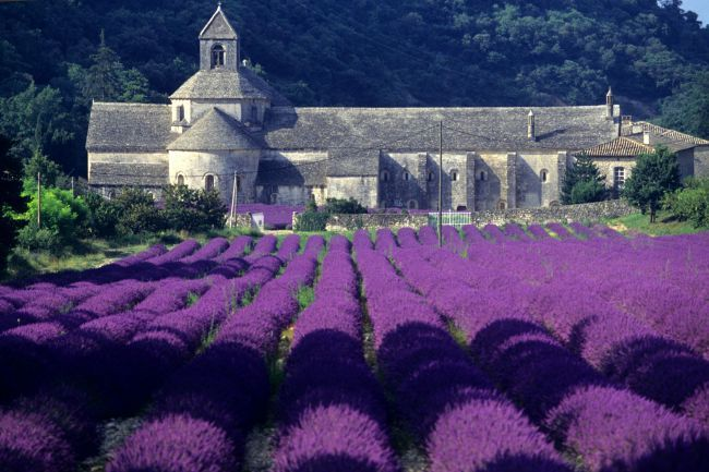 The blue gold of Provence