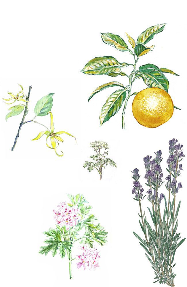 Five Essential Oils: A Repairing Complex