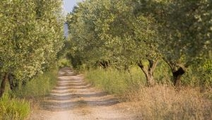 The Var Olive Route