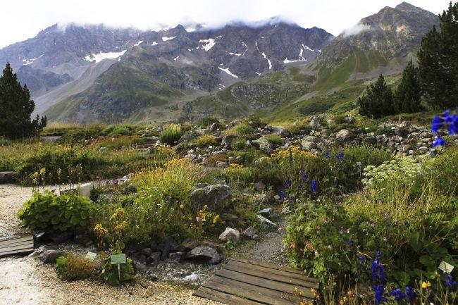 Jardín alpino