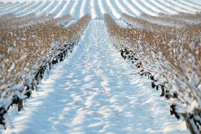 5 cosas que hacer en invierno en Provenza