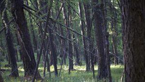 Paseo entre setas en el valle de Névache