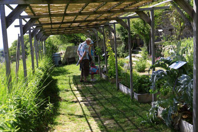 Promenade champêtre au jardin Conservatoire des plantes tinctoriales!