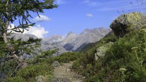 Balade aux champignons dans la vallée de Névache