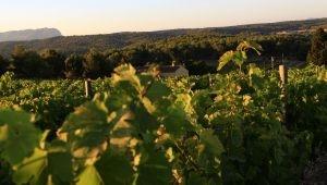 Alain Passard, un menu de fêtes aux saveurs de Provence