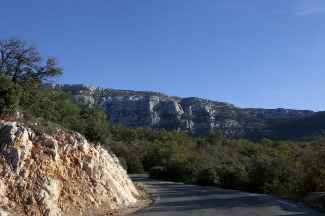 La forêt de la Sainte-Baume: coin d'ombre mystique de la Provence