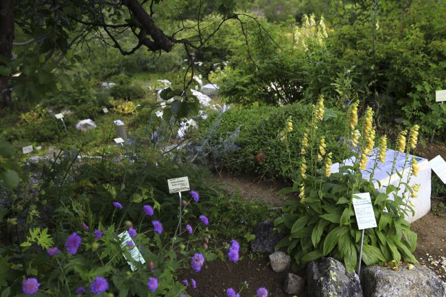 Le jardin du Lautaret
