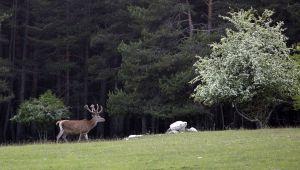 À la rencontre des animaux sauvages à travers les Alpes Maritimes