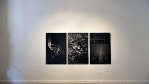 Paulo Nozolino aux Rencontres d'Arles