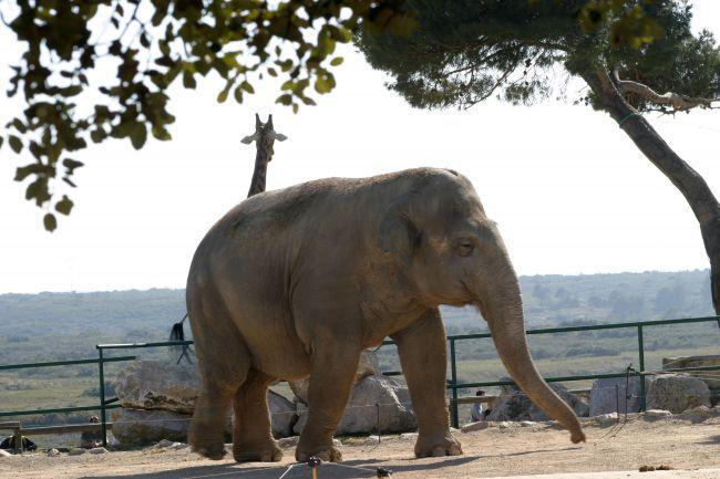 Le Zoo de La Barben : évasion sauvage au coeur de la Provence