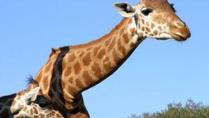 Le Zoo de La Barben: évasion sauvage au cœur de la Provence